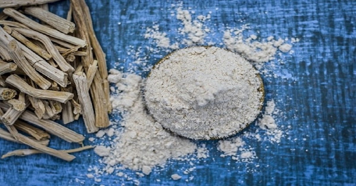 Bijeli shatavari prah na plavoj podlozi